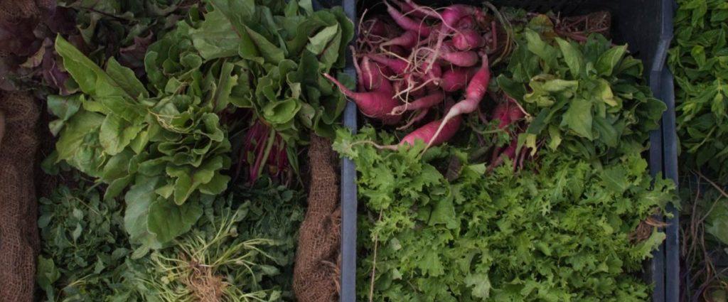 野菜に含まれる酵素の効果
