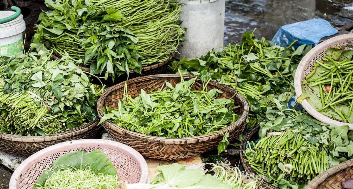ほうれん草は冷凍すれば栄養を維持できる?ほうれん草の真実を大公開