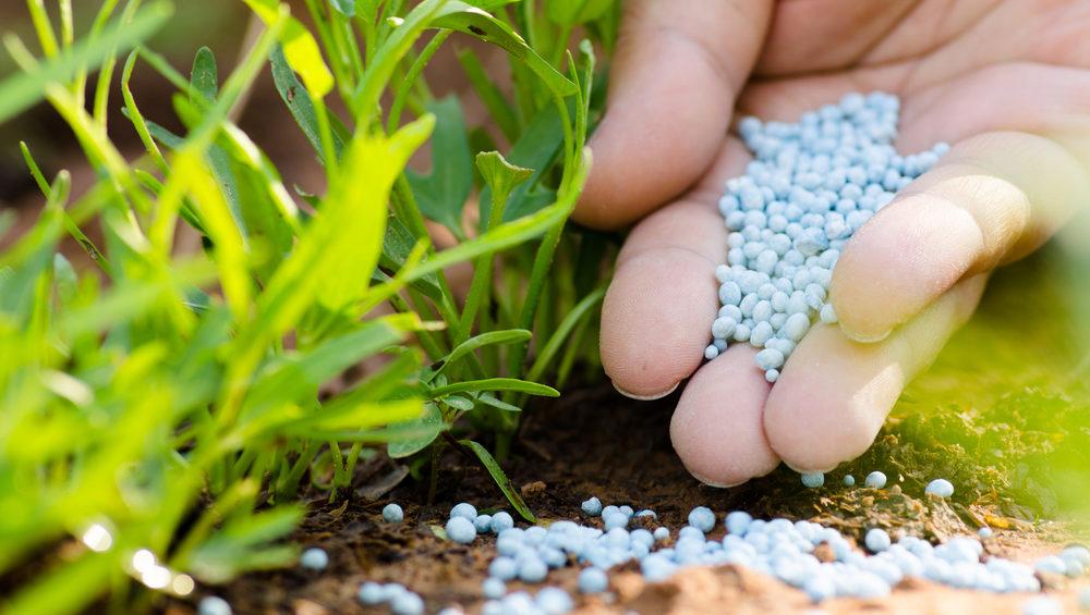 肥料のやりすぎが苦味の原因