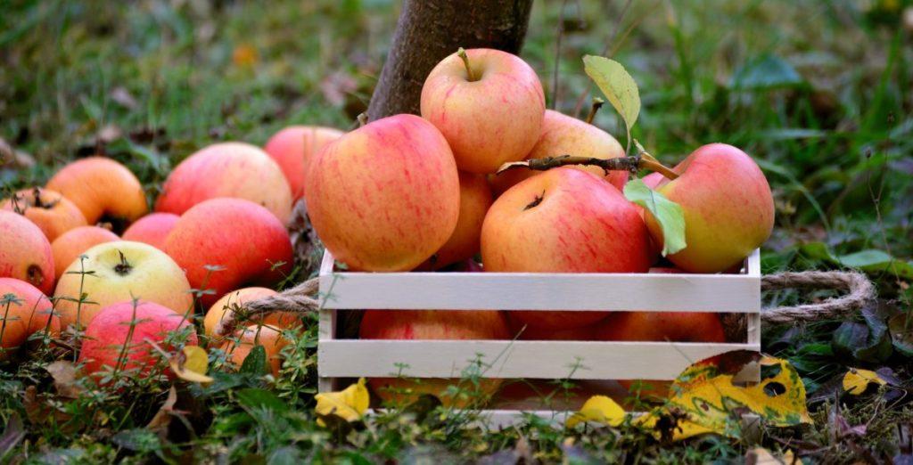 「ぼそぼそ、もさもさ」りんごにしない!新鮮さ長持ち、りんごの保存方法