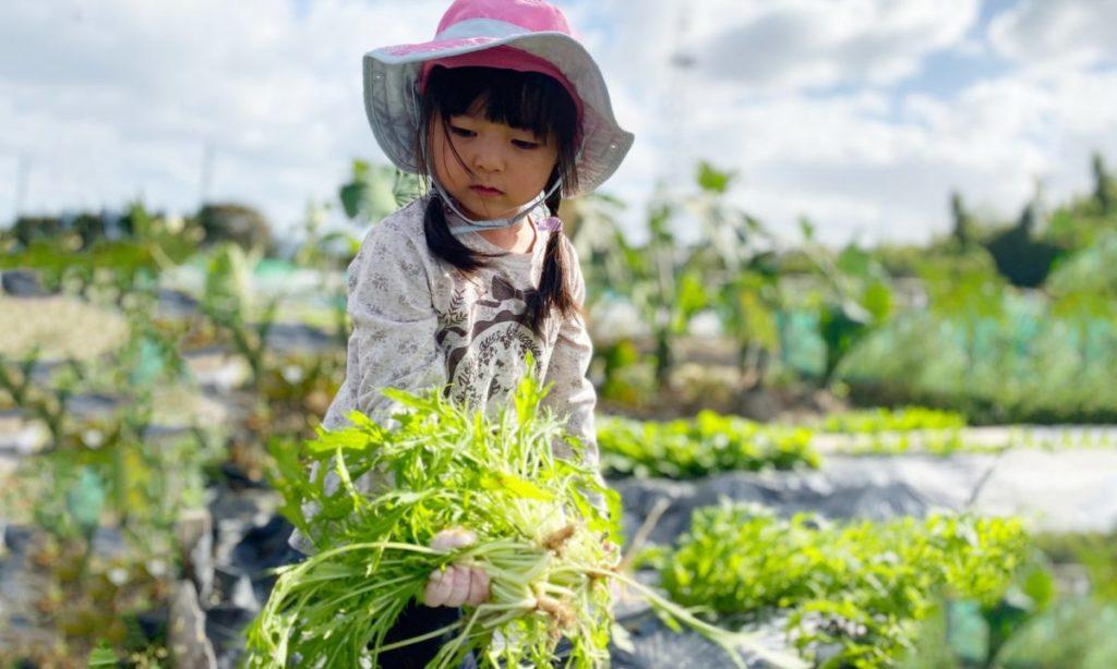 水菜を食べるとどんな効能がある?