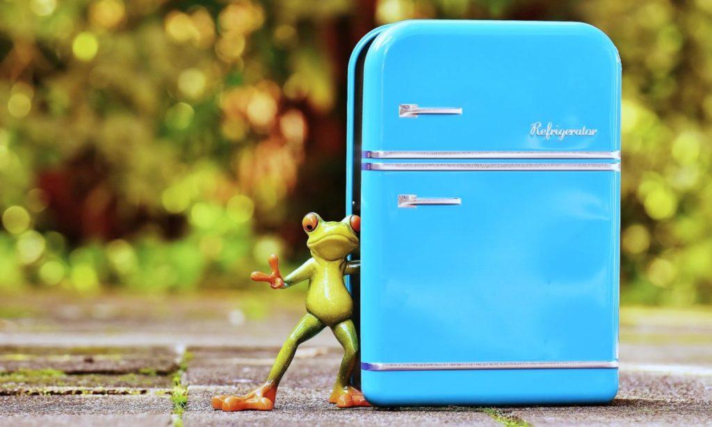 ケールを短期間だけ保存するなら冷蔵でも大丈夫!