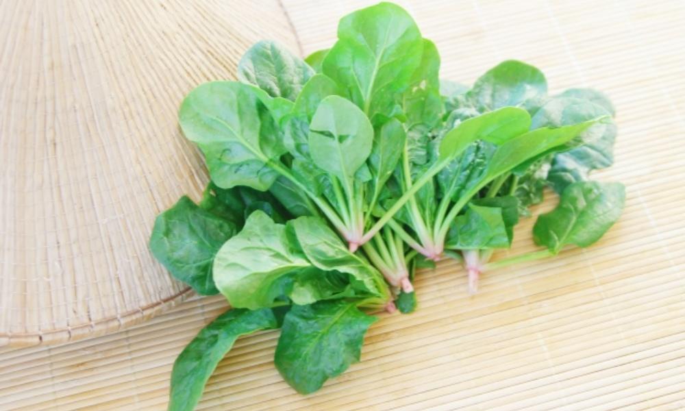 ほうれん草の栄養と効能・効果って?実は毎日食べたい万能野菜!