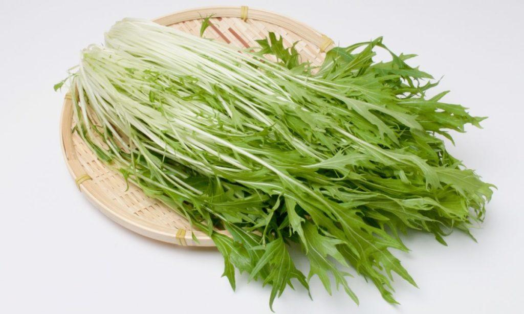 新鮮な水菜の見分け方