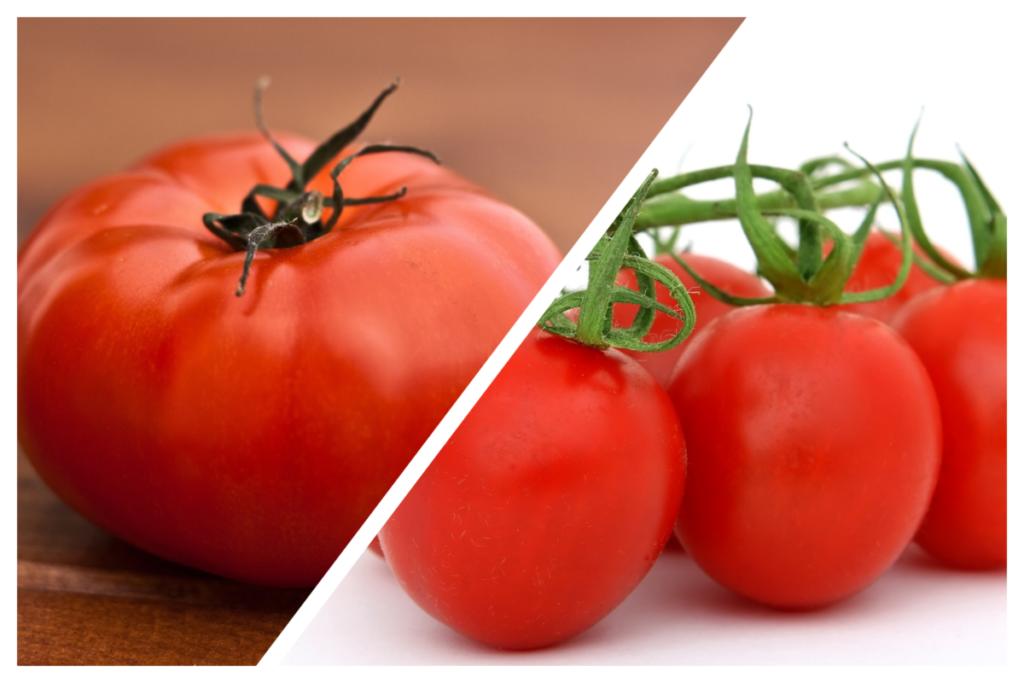 トマトとミニトマトの栄養成分の比較