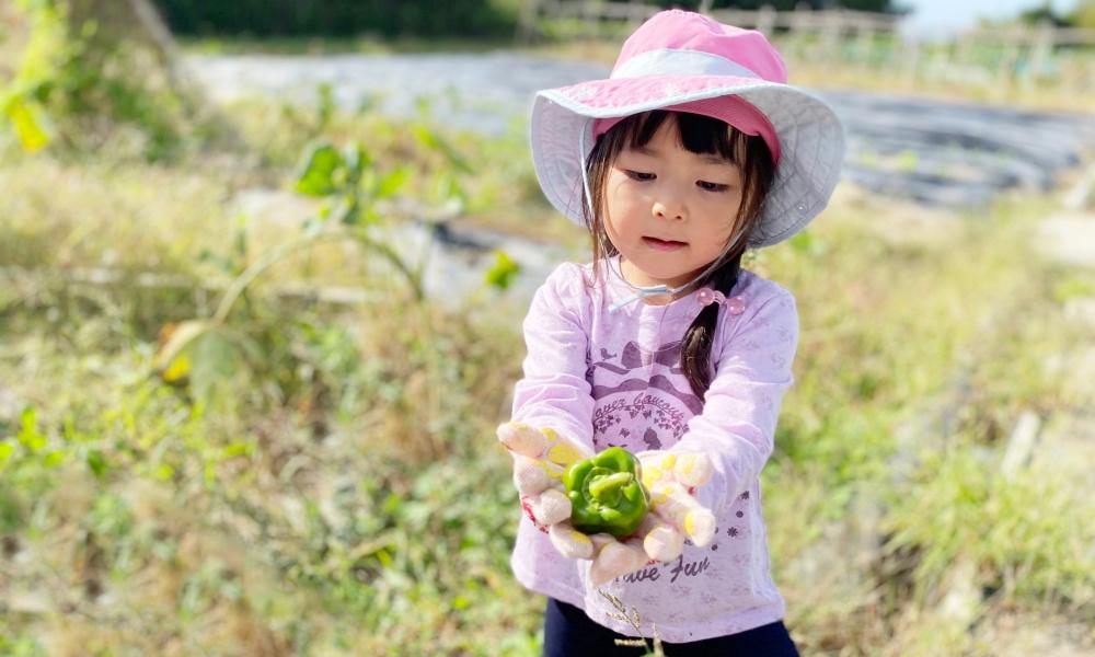 搾りかすの手作り堆肥で家庭菜園を!