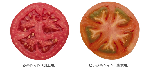 加工用トマトと生食用トマト