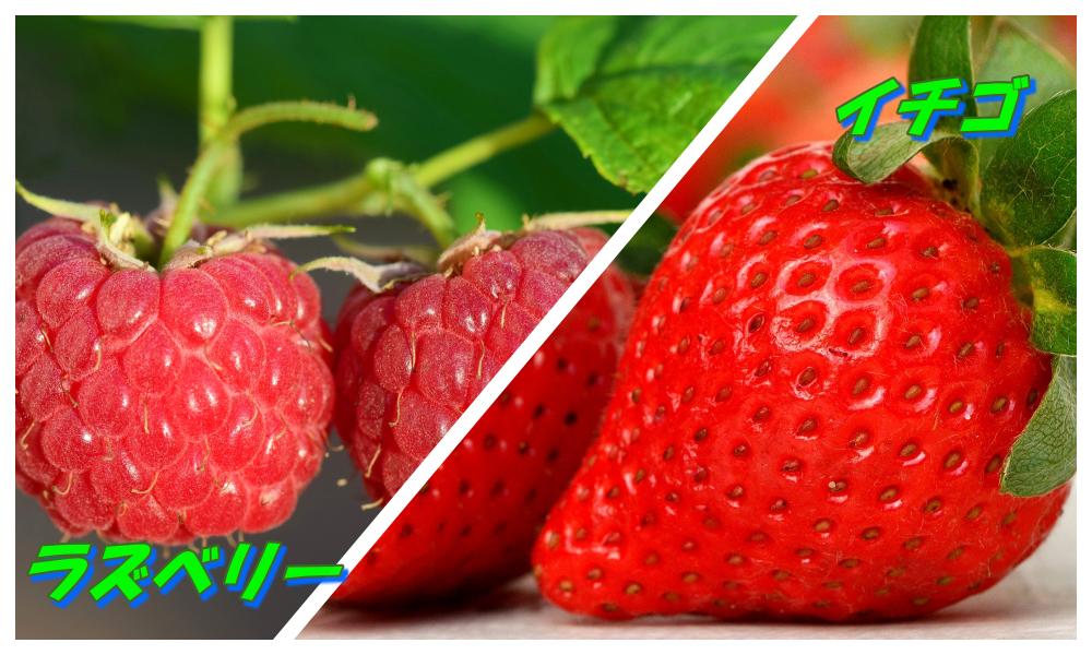 ラズベリーとイチゴの違いを比較