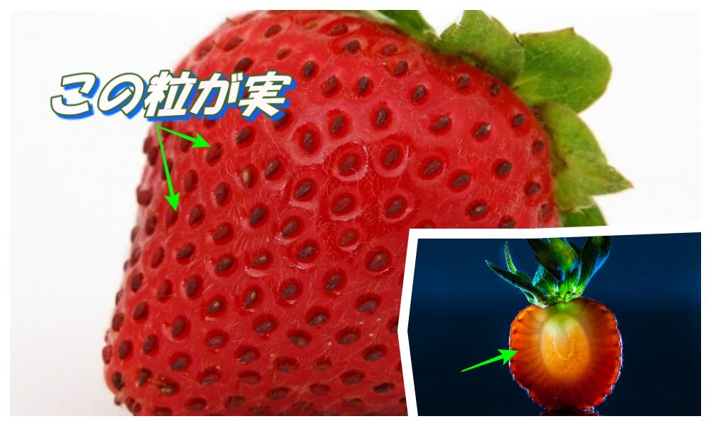 イチゴの実はどこ?