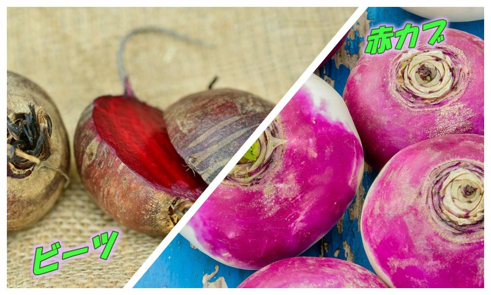 ビーツと赤カブの栄養の違いは・・・赤カブってビーツの代用で使える?