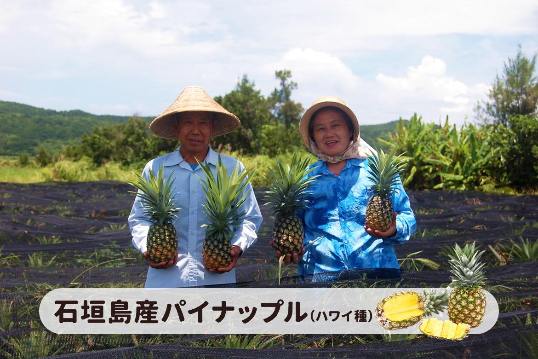 石垣島産パイナップル「石垣島しまかろいファーム」
