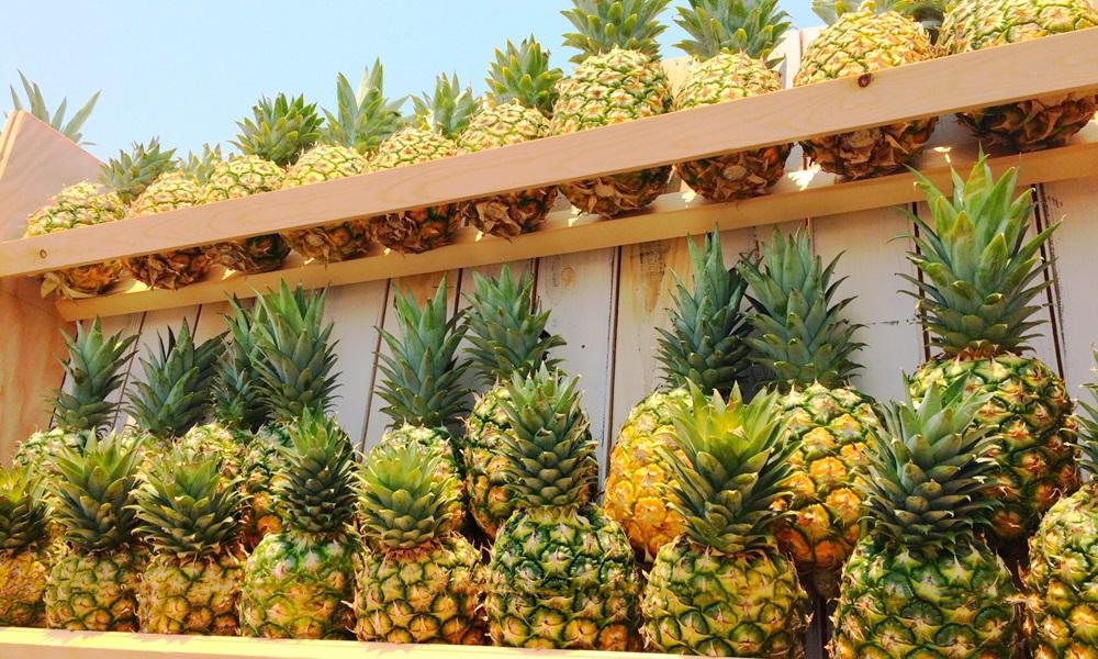 国産パイナップルの旬の時期はいつ?産地はどこ?国産パイナップルの素晴らしい魅力!