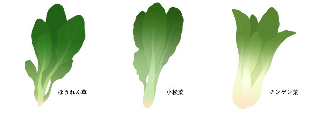 チンゲン菜の栄養成分表
