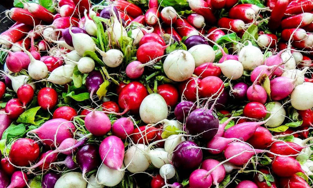 ビーツと赤カブってどんな野菜