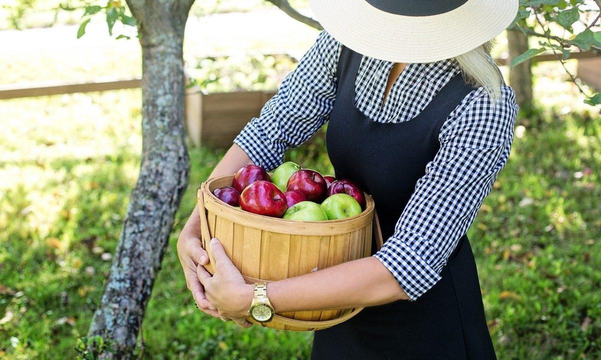 りんごの色の違いは、色素のバランス