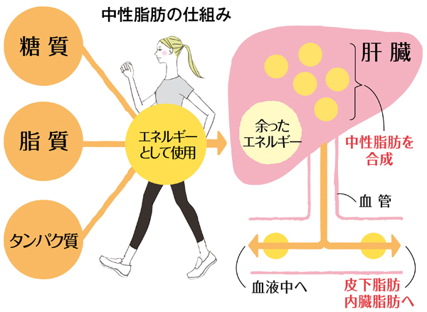 体の仕組み