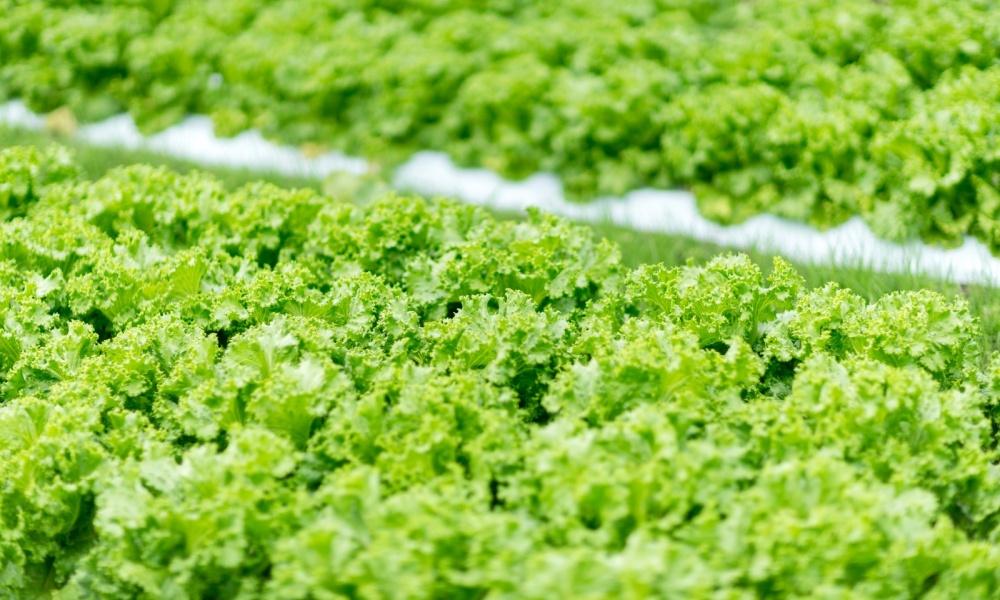 兵庫県の姫路・神戸で有機野菜を宅配する農家や業者8選!