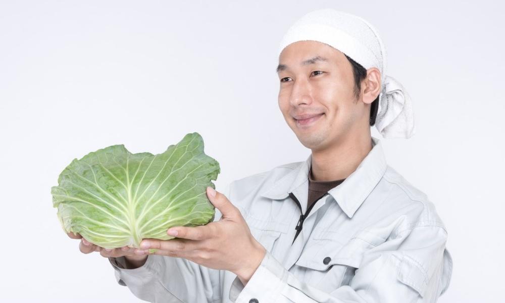 宅配で有機野菜を購入したい!兵庫県の姫路、神戸の有機栽培農家を紹介