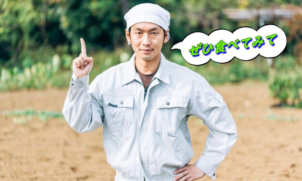 札幌で栽培されている野菜とその収穫時期