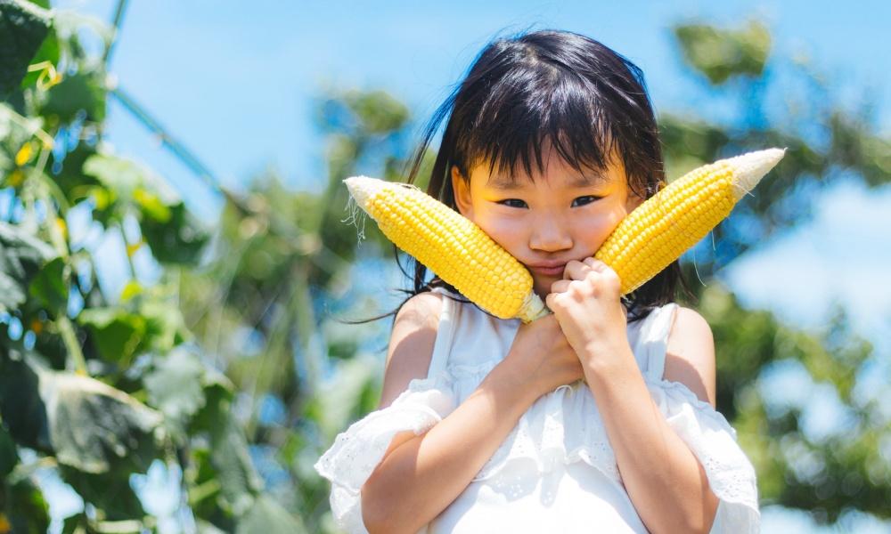 札幌の野菜宅配10選!北海道産のおすすめ野菜や収穫時期も合わせて紹介