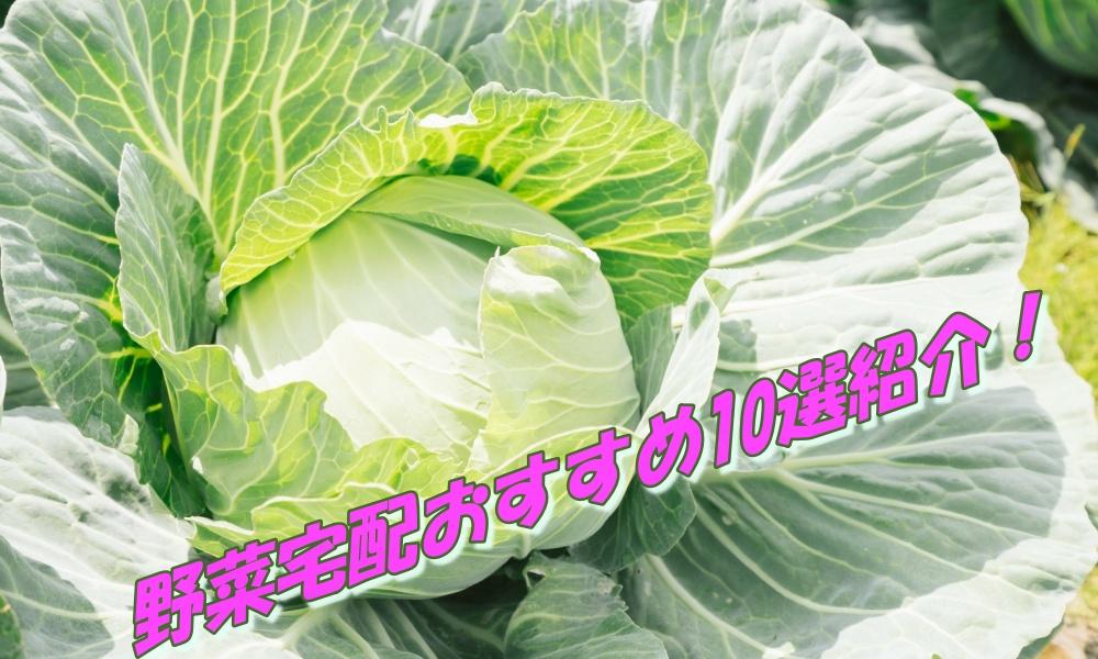 大阪の野菜宅配10選!能勢町・藤井寺市・箕面市でおすすめの業者を紹介