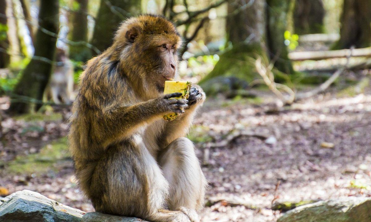 キウイとパイナップルの酵素を活用するときのポイント!