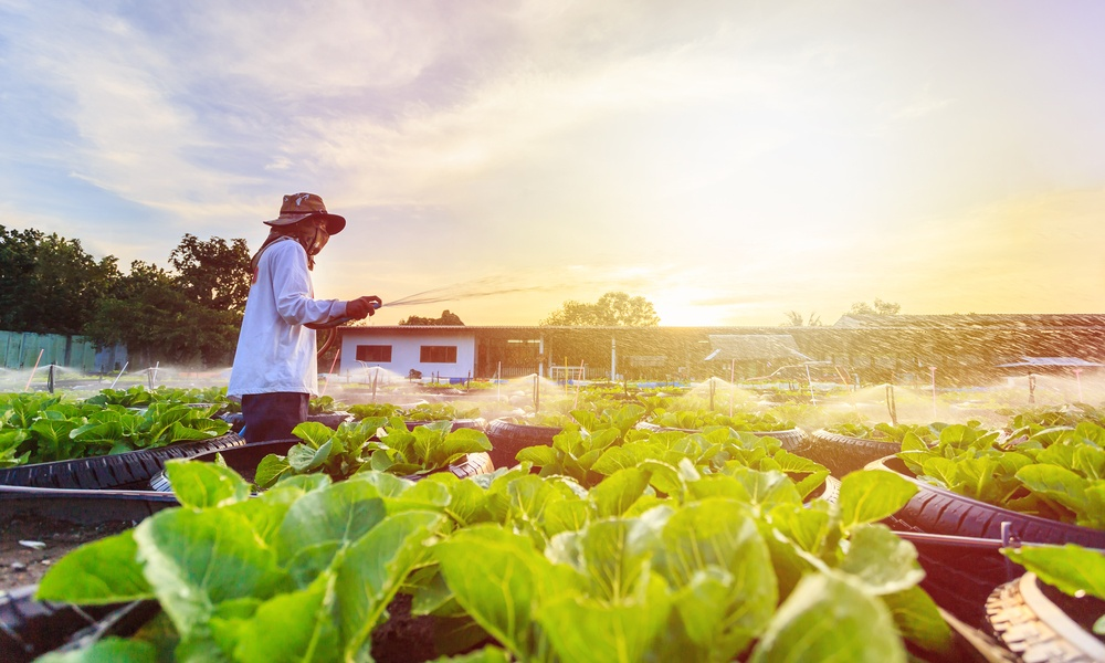 有機栽培(オーガニック)と無農薬の違い。意味は同じ?有機野菜の正しい選び方も解説