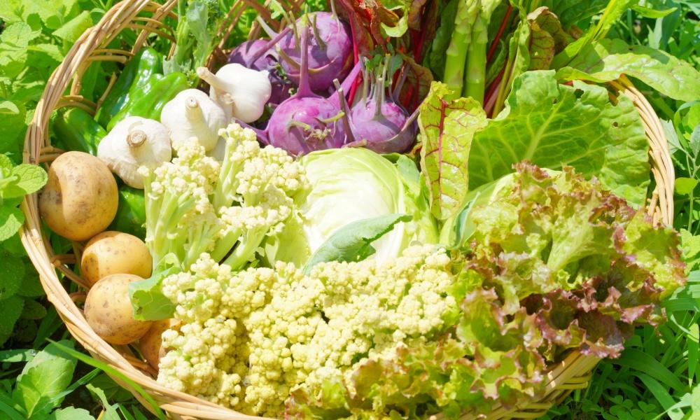 三重の野菜宅配ならこちらがおすすめ!人気の宅配業者10選を紹介!