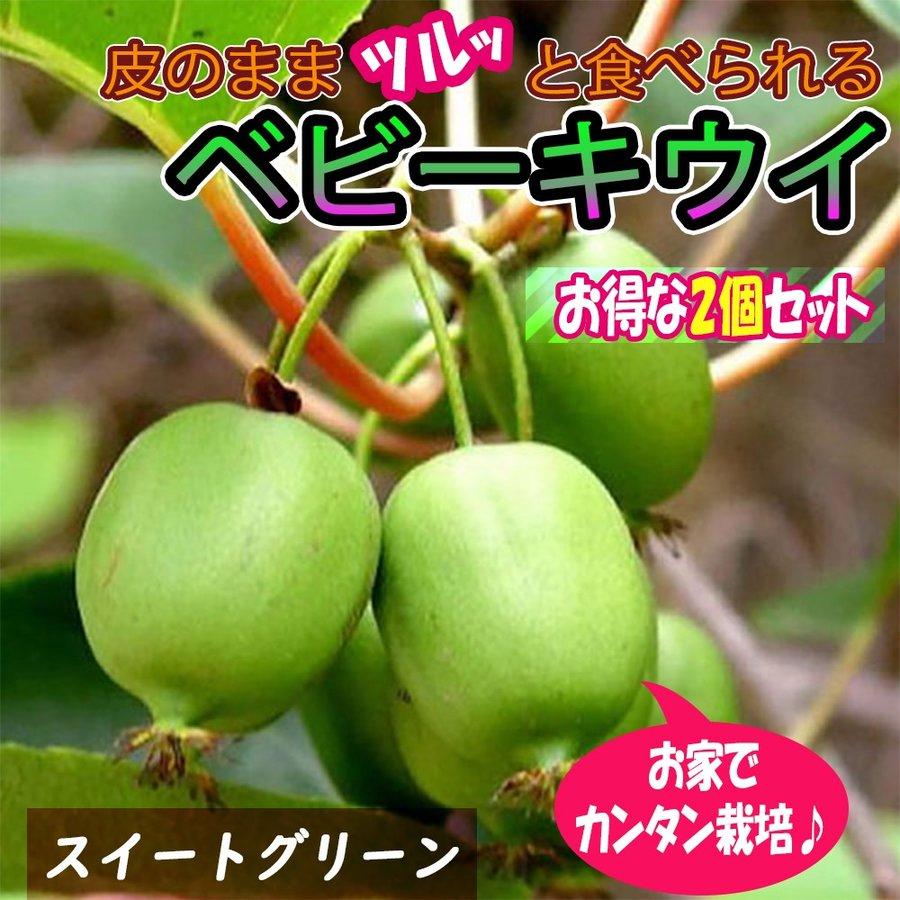 サルナシ苗 ベビーキウイ スイートグリーン 果樹苗 9cmポット 2個セット 送料無料