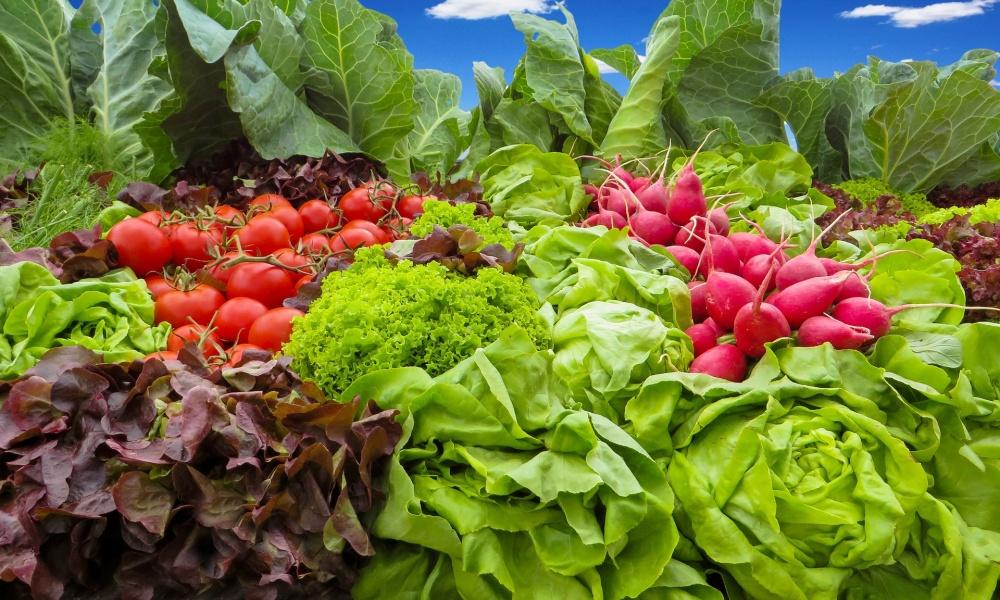 野菜宅配を選ぶポイント